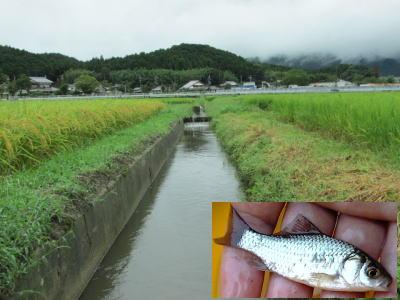 小鮒釣りTOP写真