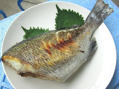 0_黒鯛塩焼き_TOP写真