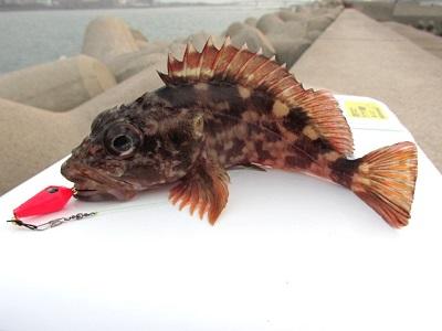 11_釣れた魚