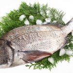 黒鯛(チヌ)料理のポイント