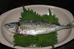 ajishio22