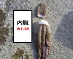 タコのさばき方TOP写真