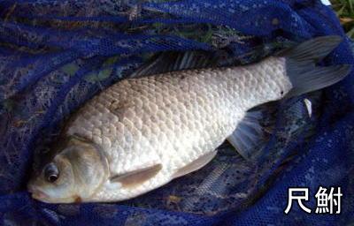 ウキ釣りTOP写真