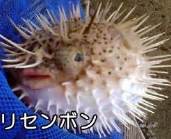 外道魚(番外編)TOP写真