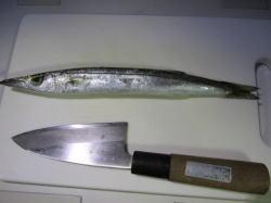 kamashio1