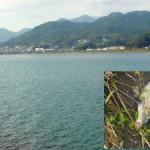 川での投げ釣り…巨大コイ他
