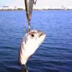 小物のルアー釣り…メッキ・カマス等