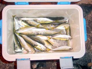 サビキ釣りTOP写真