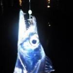 太刀魚(タチウオ)の夜ウキ釣り