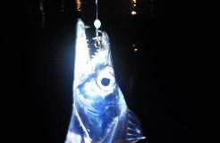 タチウオ釣りTOP写真