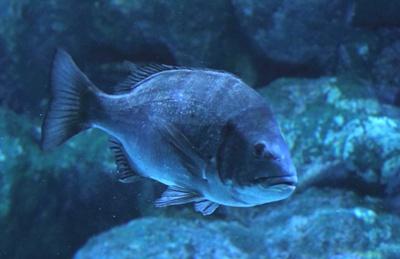 黒鯛ウキフカセ釣りTOP写真