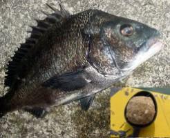 紀州釣りTOP写真