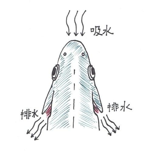 6_魚の吸排水_500x500