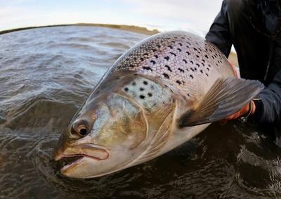 5_傷ついた魚のリリース
