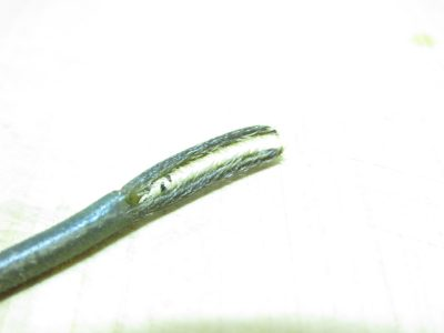 テナガエビのハサミ