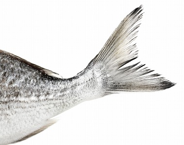 魚の尾部分