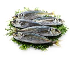 海の小魚はアニサキス症リスクが低い理由TOP写真